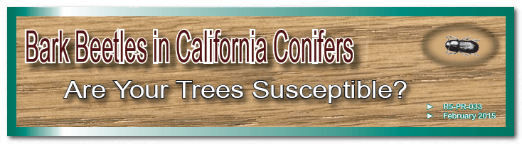 Bark Beetles in California Conifers - Are Your Trees Susceptible? Website